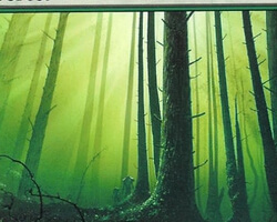 Magic the Gathering 10th Edition Card: Forest (d)