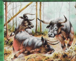 Magic the Gathering 5th Edition Card: Aurochs