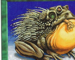 Magic the Gathering 5th Edition Card: Chub Toad