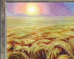 Magic the Gathering 5th Edition Card: Plains (c)