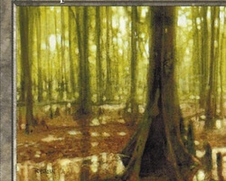 Magic the Gathering 5th Edition Card: Swamp (c)