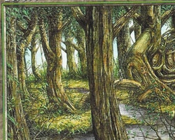 Magic the Gathering 6th Edition Card: Forest (b)