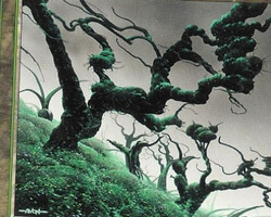 Magic the Gathering 7th Edition Card: Forest (b)