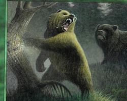 Magic the Gathering 7th Edition Card: Grizzly Bears