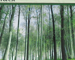 Magic the Gathering 8th Edition Card: Forest (a)