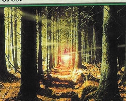 Magic the Gathering 8th Edition Card: Forest (c)