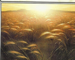 Magic the Gathering 8th Edition Card: Plains (a)