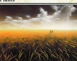 Magic the Gathering 8th Edition Card: Plains (d)