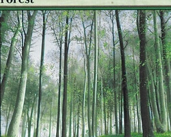 Magic the Gathering 9th Edition Card: Forest (a)