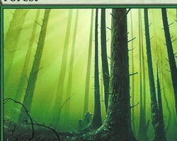 Magic the Gathering 9th Edition Card: Forest (b)