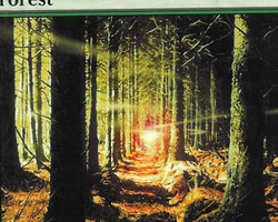 Magic the Gathering 9th Edition Card: Forest (c)