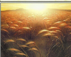 Magic the Gathering 9th Edition Card: Plains (a)