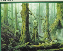 Magic the Gathering Champions of Kamigawa Card: Forest (a)