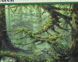 Magic the Gathering Champions of Kamigawa Card: Forest (b)