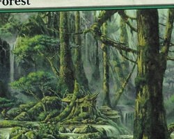 Magic the Gathering Champions of Kamigawa Card: Forest (c)