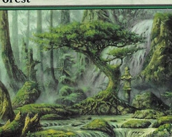 Magic the Gathering Champions of Kamigawa Card: Forest (d)
