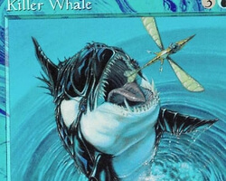 Magic the Gathering Exodus Card: Killer Whale