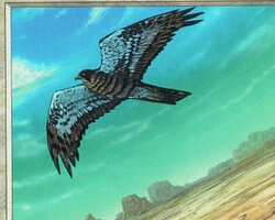 Magic the Gathering Homelands Card: Mesa Falcon