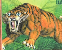 Magic the Gathering Ice Age Card: Sabretooth Tiger