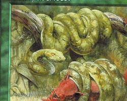 Magic the Gathering Mercadian Masques Card: Boa Constrictor