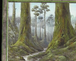 Magic the Gathering Mercadian Masques Card: Forest (a)
