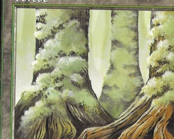 Magic the Gathering Mercadian Masques Card: Forest (c)