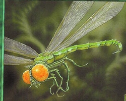 Magic the Gathering Mercadian Masques Card: Venomous Dragonfly