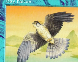Magic the Gathering Mirage Card: Bay Falcon