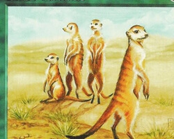 Magic the Gathering Mirage Card: Karoo Meerkat