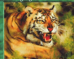 Magic the Gathering Mirage Card: Stalking Tiger
