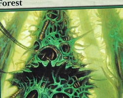 Magic the Gathering Mirrodin Card: Forest (a)