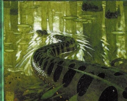 Magic the Gathering Portal Card: Anaconda