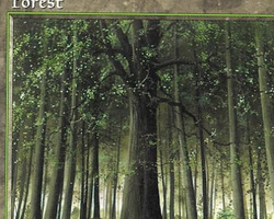 Magic the Gathering Portal Card: Forest (a)