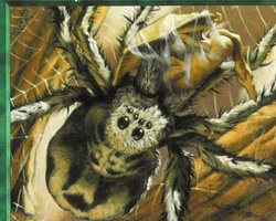 Magic the Gathering Portal Card: Giant Spider