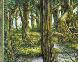 Magic the Gathering Portal Second Age Card: Forest (b)