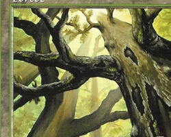 Magic the Gathering Tempest Card: Forest (a)