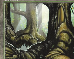 Magic the Gathering Tempest Card: Forest (b)