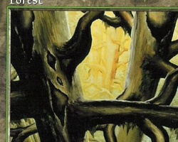 Magic the Gathering Tempest Card: Forest (c)
