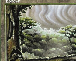 Magic the Gathering Tempest Card: Forest (d)