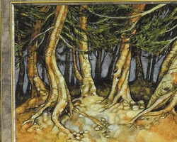 Magic the Gathering Tempest Card: Pine Barrens