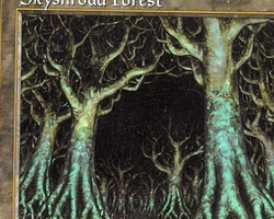 Magic the Gathering Tempest Card: Skyshroud Forest