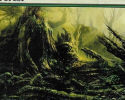 Magic the Gathering Time Spiral Card: Forest (a)