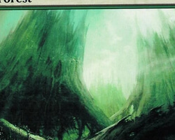 Magic the Gathering Time Spiral Card: Forest (b)