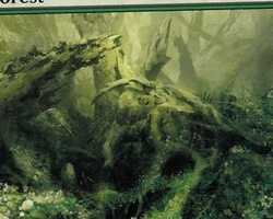 Magic the Gathering Time Spiral Card: Forest (d)