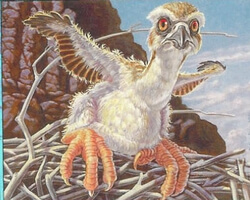 Magic the Gathering Urza's Destiny Card: Fledgling Osprey