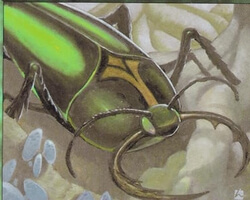 Magic the Gathering Urza's Destiny Card: Goliath Beetle