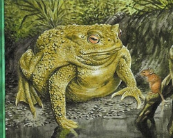 Magic the Gathering Urza's Legacy Card: Bloated Toad
