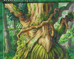 Magic the Gathering Urza's Legacy Card: Treefolk Mystic