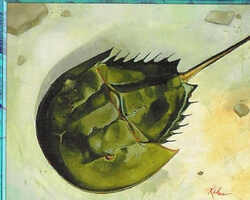 Magic the Gathering Urza's Saga Card: Horseshoe Crab